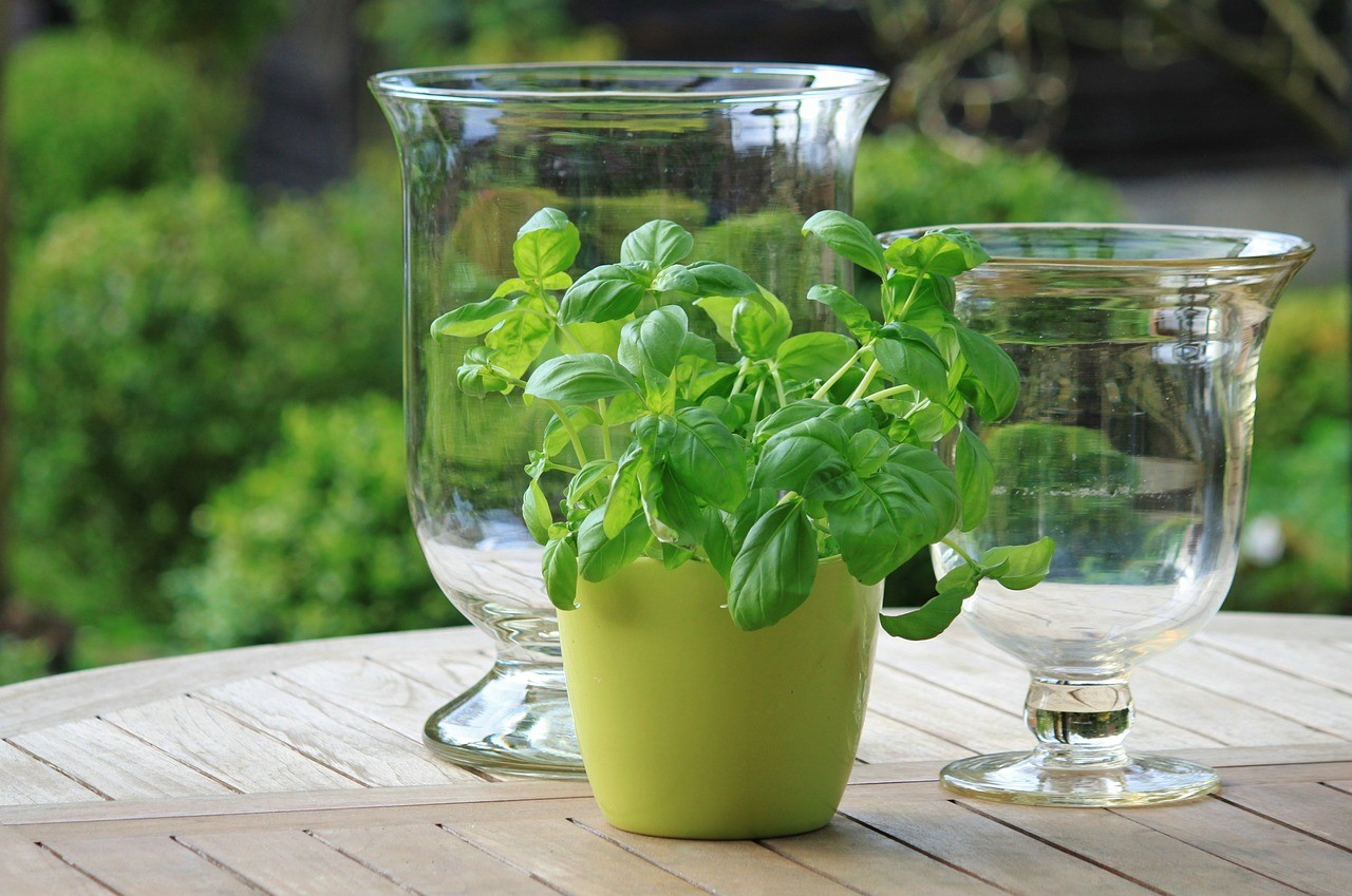 SOS Tips: How to store fresh herbs
