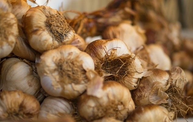 Have you discovered Quebec garlic?
