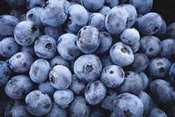 Blueberries, champion of antioxidants