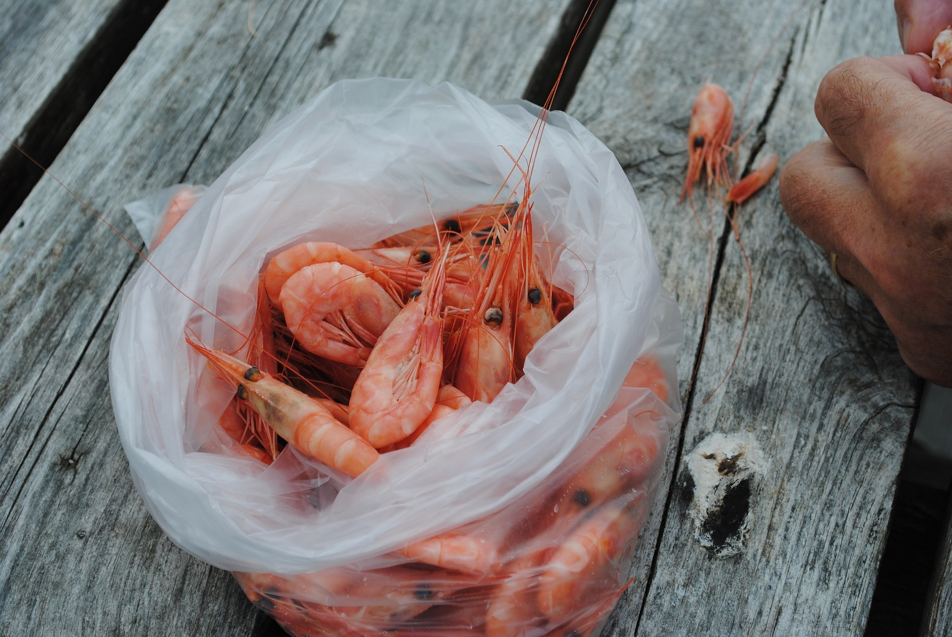 Northern shrimp: a Canadian delicacy