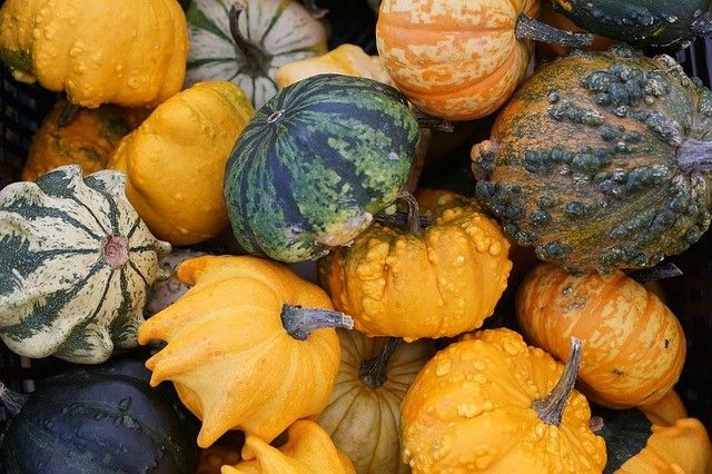 Squashes and pumpkins for taste and good health