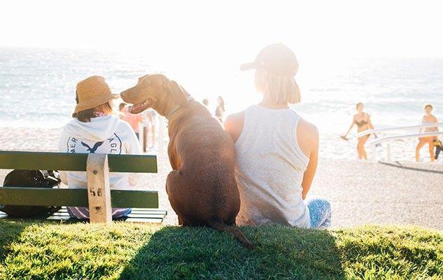 promener son chien walking your dog