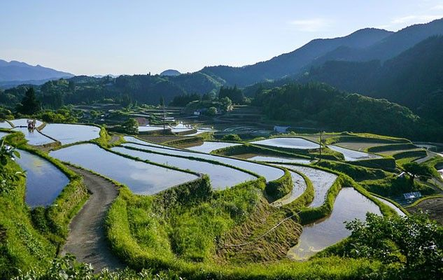 japan-rice-paddy