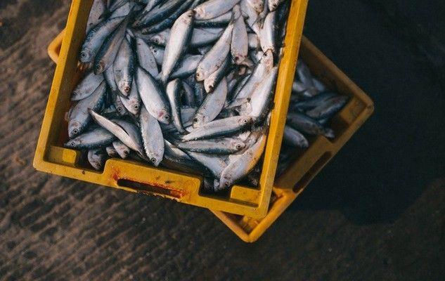 fishing-peche-sustainable-fish