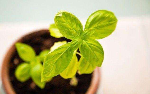 herbes-herbs-kitchen-cuisine