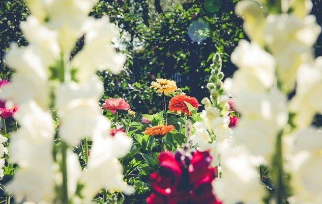 garden-jardin