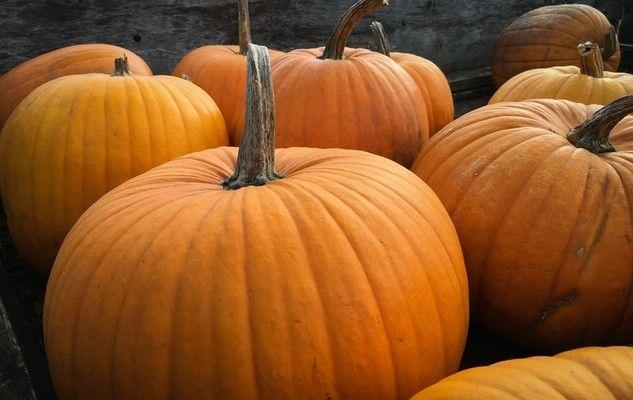 pumpkins-citrouilles