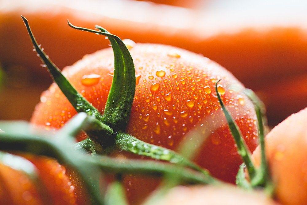 tomate tomato