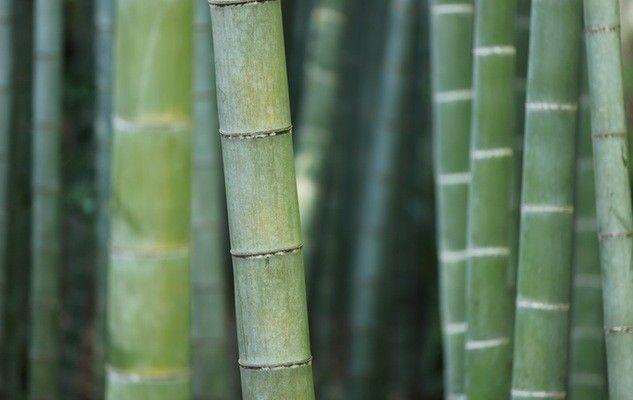 Adopter la vaisselle en bambou