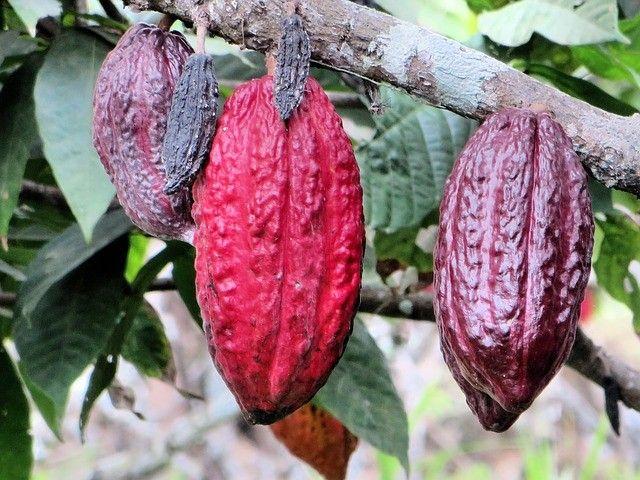 Some Ecuadorian Specialties