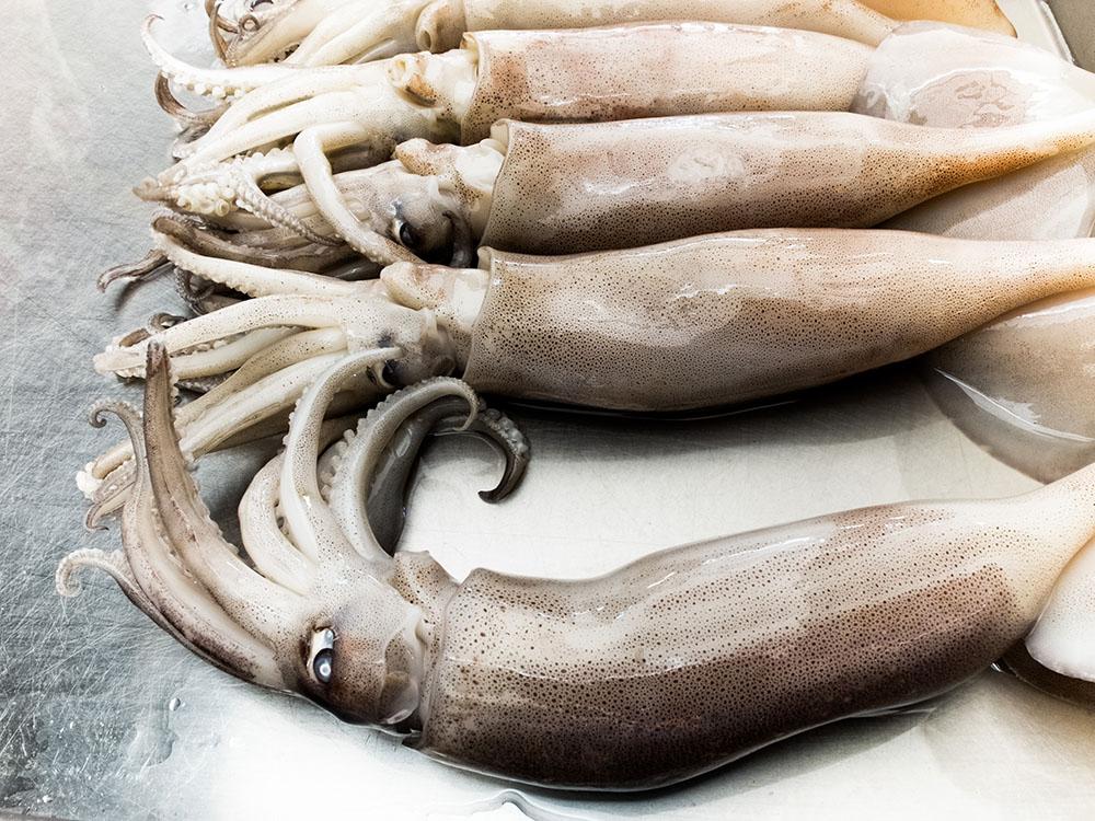 seiche frais avec des fruits de mer, Fresh squid on the seafood market
