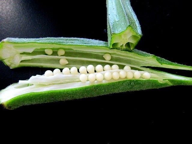 Okra, veggie exotica