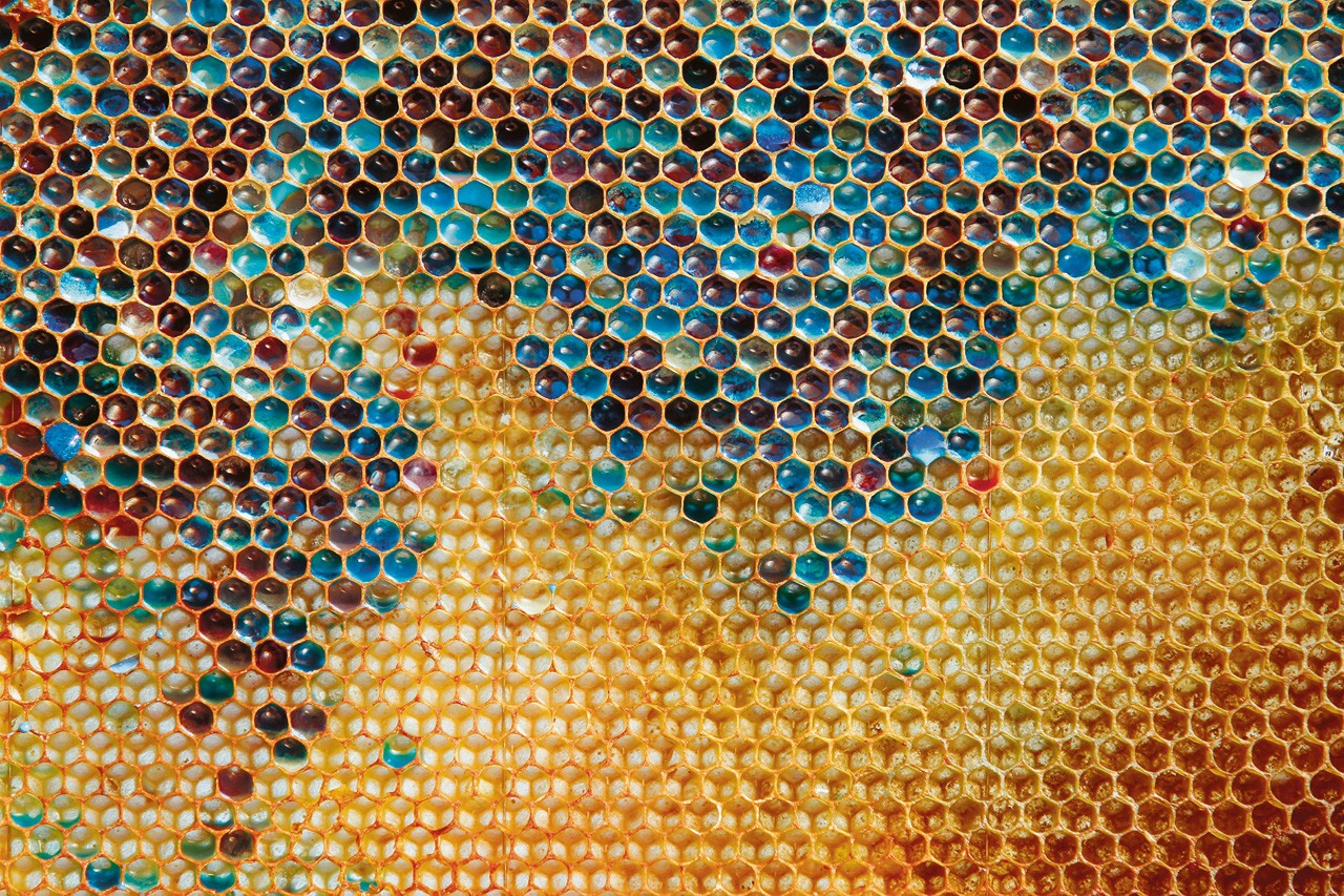 miel de toutes les couleurs