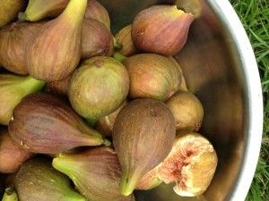 figs, figues