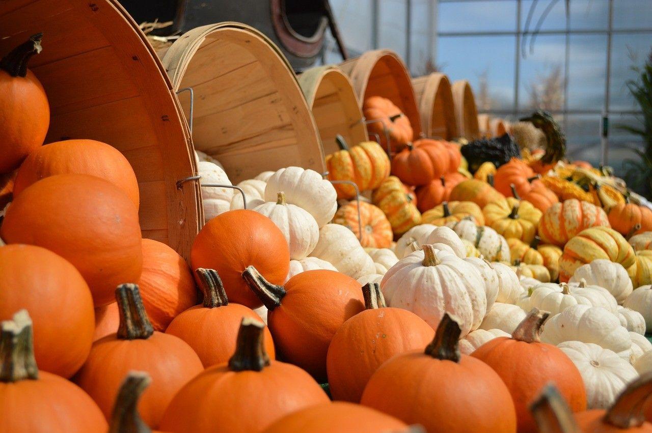 Orange as a pumpkin