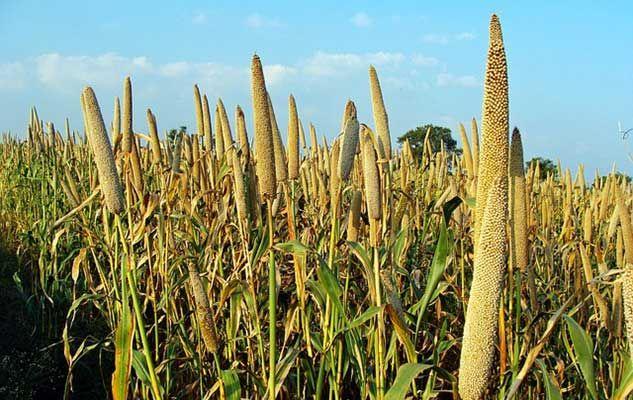 Discovering millet