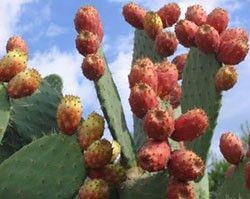 SOSCuisine/Poire-cactus