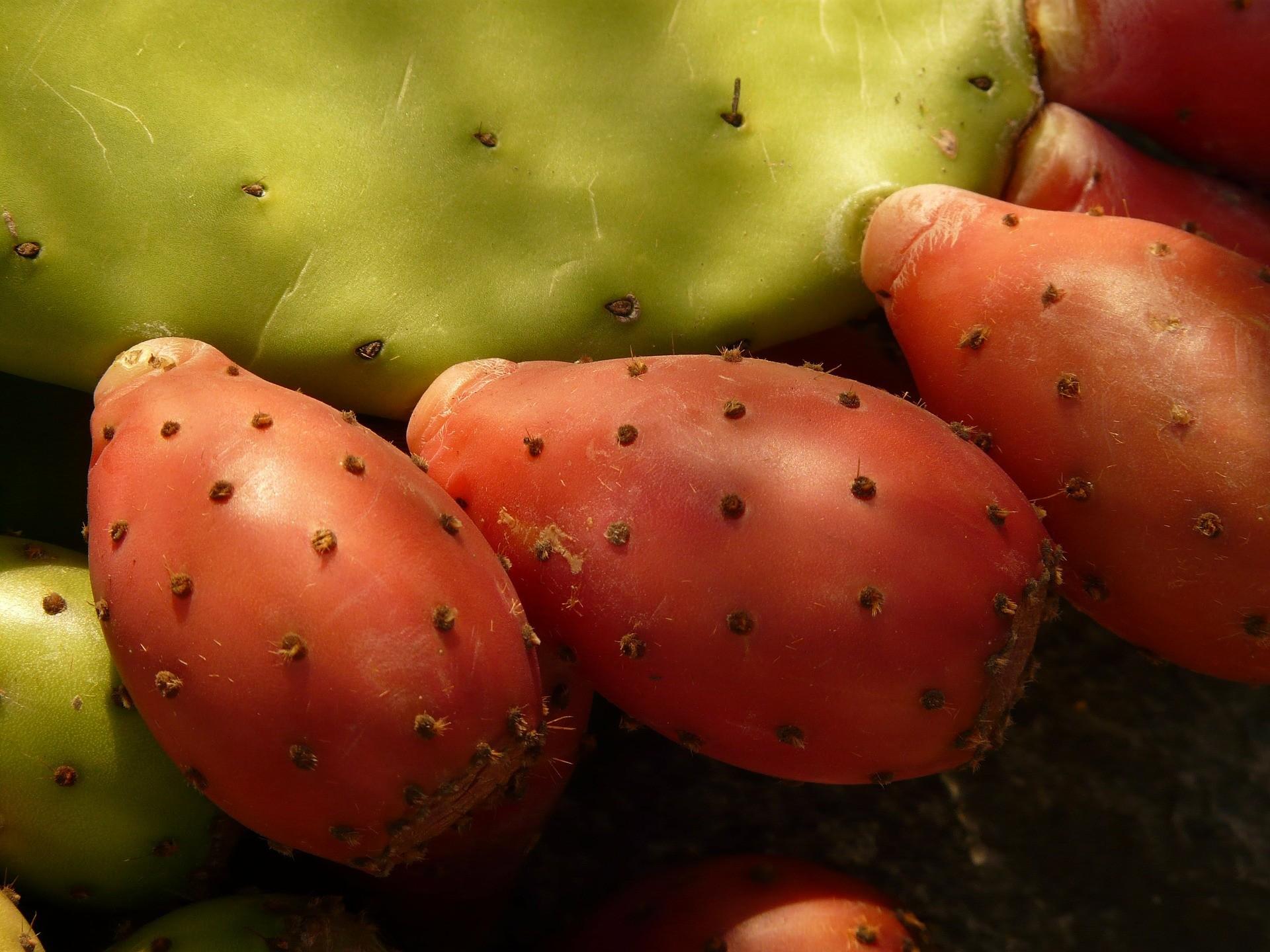 prickly pear, figue de Barbarie, poire cactus,