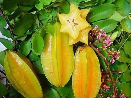 SOSCuisine/Star fruit
