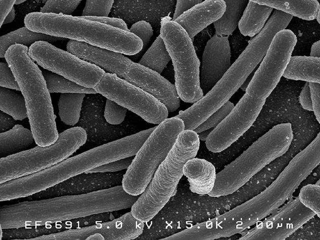 microbiote microbiotia