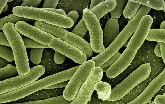 "World Digestive Health Day 2014: Spotlight on ""Gut Microbes"""