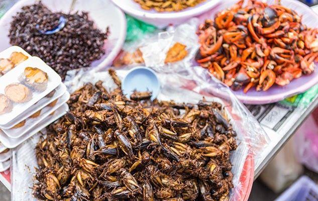 Les insectes, nourriture du futur
