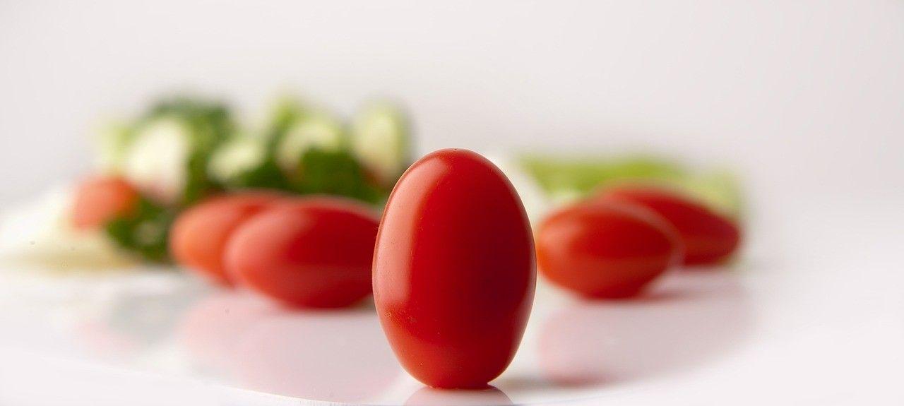 Des tomates cultivées à l'année au… pays du Père Noël!