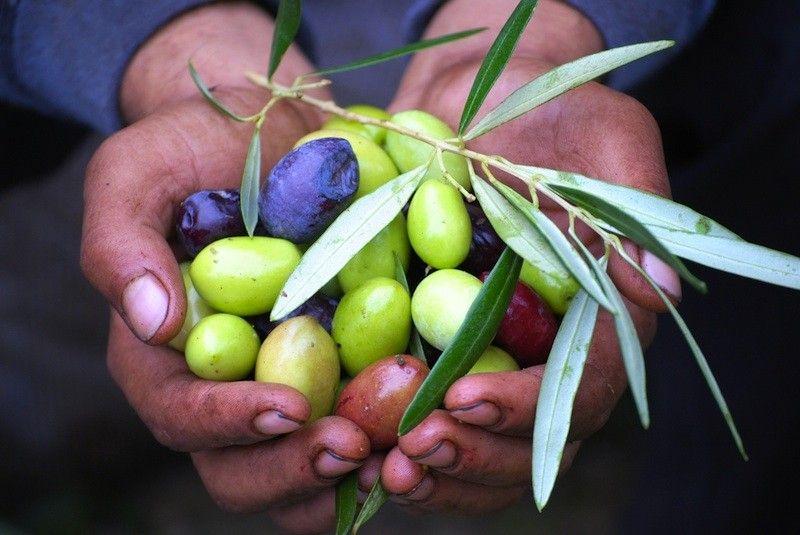 huile olive oil