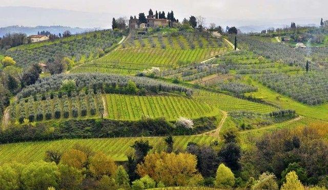 vins italiens italian wines
