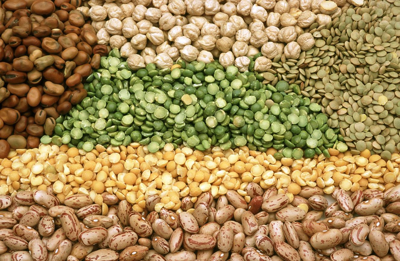 Pulses, legumes, legumineuses
