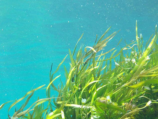 algues seaweed