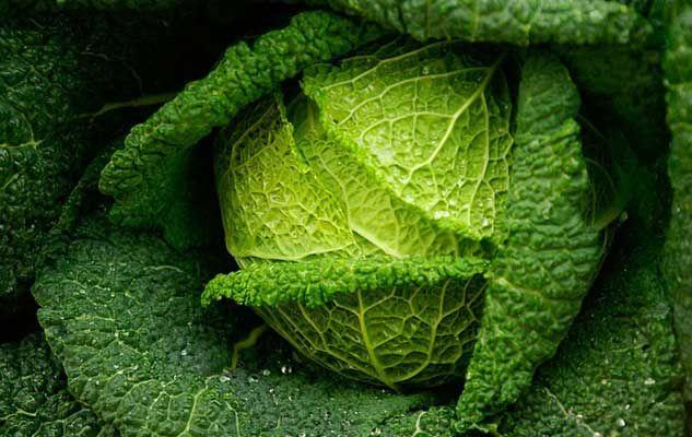 cabbage choux