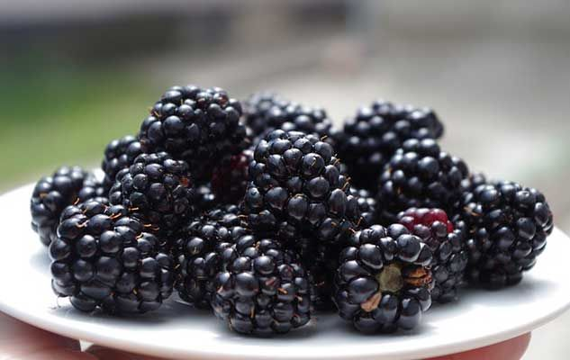 mures blackberries