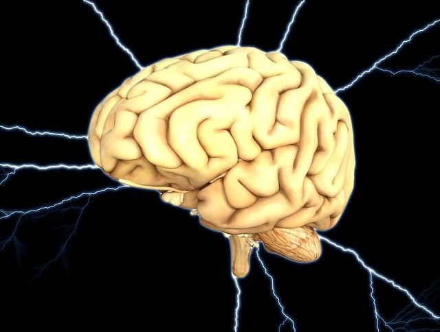brain-cerveau