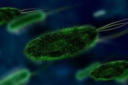 Small Intestinal Bacterial Overgrowth (SIBO) and Diet