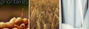 Allergènes prioritaires : Arachides, blé, lait de vache