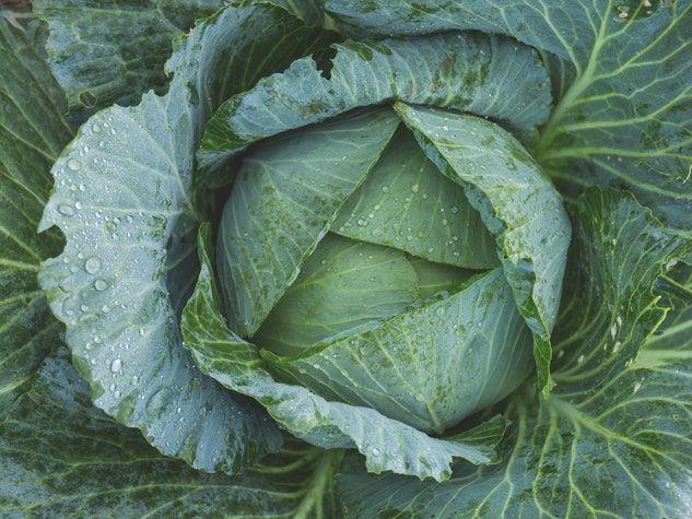 Top 10 Low-Carb Veggies