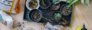 Come creare un orto sul proprio balcone