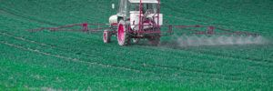 Glyphosate on Our Plates