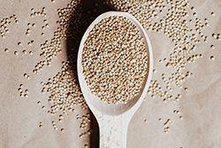 Le quinoa, une perle au propre et au figuré